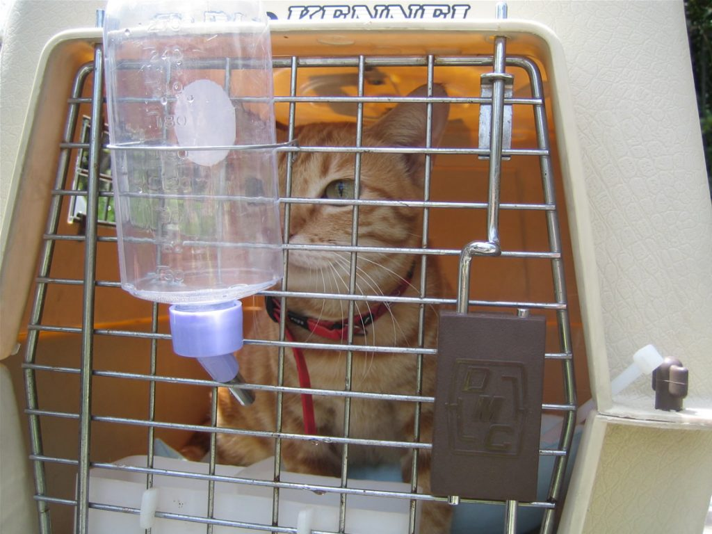 Cat Relocation, Pet Travel, Pet Relocation, House Relocation, Moving Abroad, China relocation, Relocation services, House Move, Prepare your move